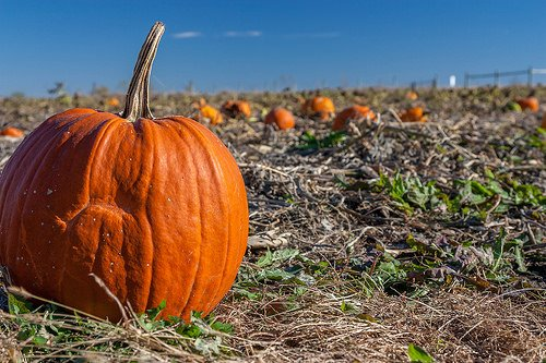 227768856613dfc4b4643 151075 o The Benefits of Adding Pumpkin to Your Diet This Fall