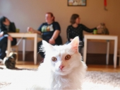 California's First Cat Cafe to Open in October : People.com