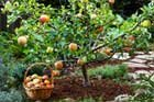 Little Fruit Trees Bring HUGE Rewards