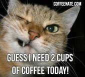 2 Cups of #Coffee Cat