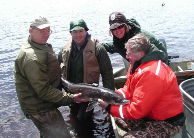Anglers Are Being Urged to Return Their Overdue 2014 Sturgeon Fishing Report Cards
