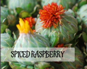 Spiced Raspberry | Tea Gallerie