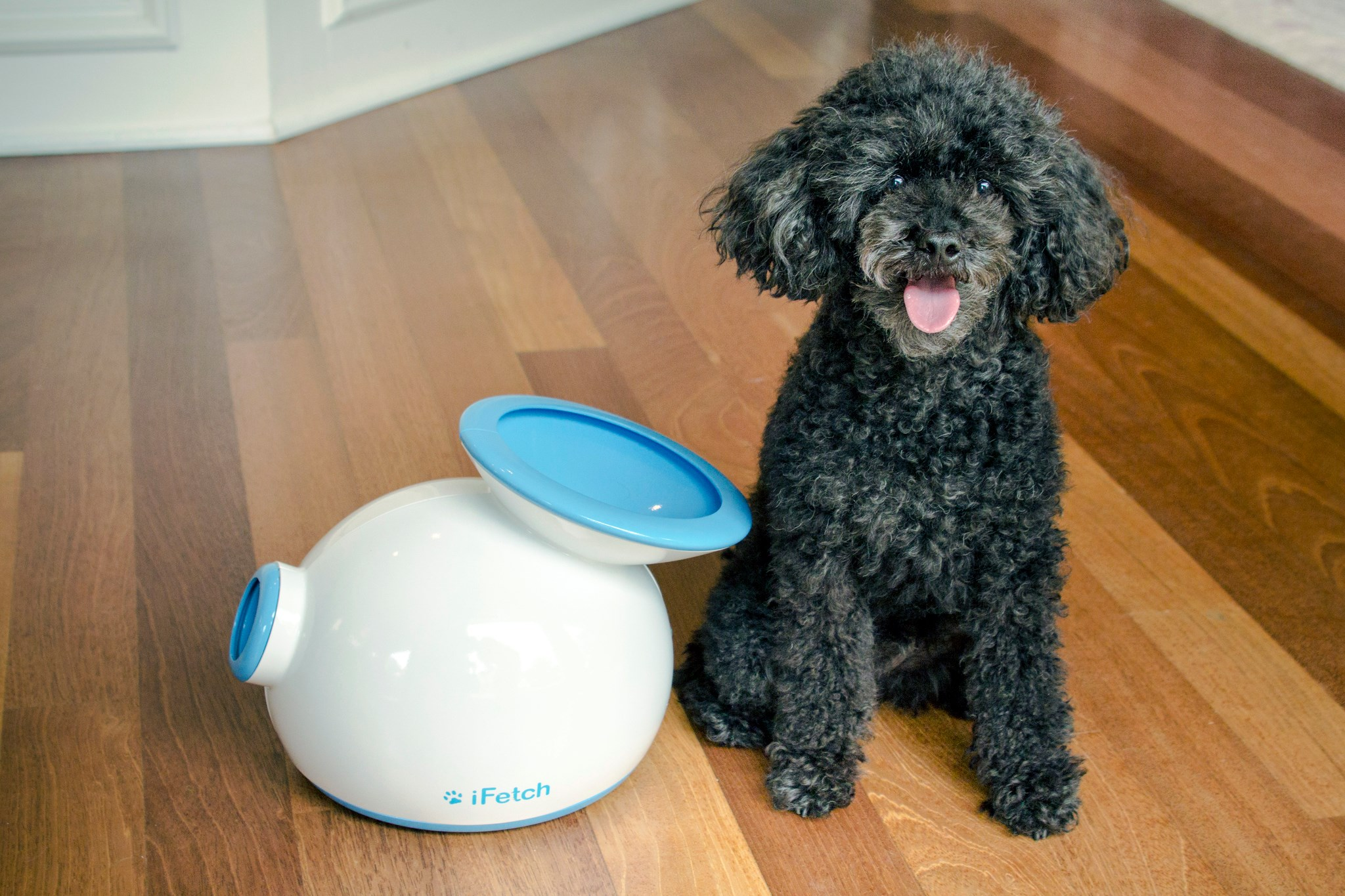 iFetch-interactive-playmate-for-your-dog