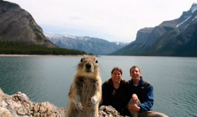 Crasher-Squirrel-in-Banff-National-Park-Alberta-Canada