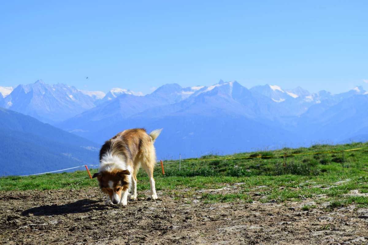 Europe Alps landscape explored by youth travel tours