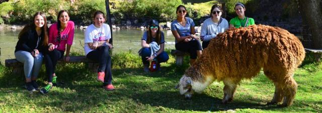 Students spend time with llamas on their teen travel tour of Peru.