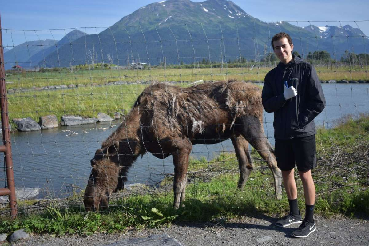 Teen boy takes a photo with a moose on summer service program in Alaska.