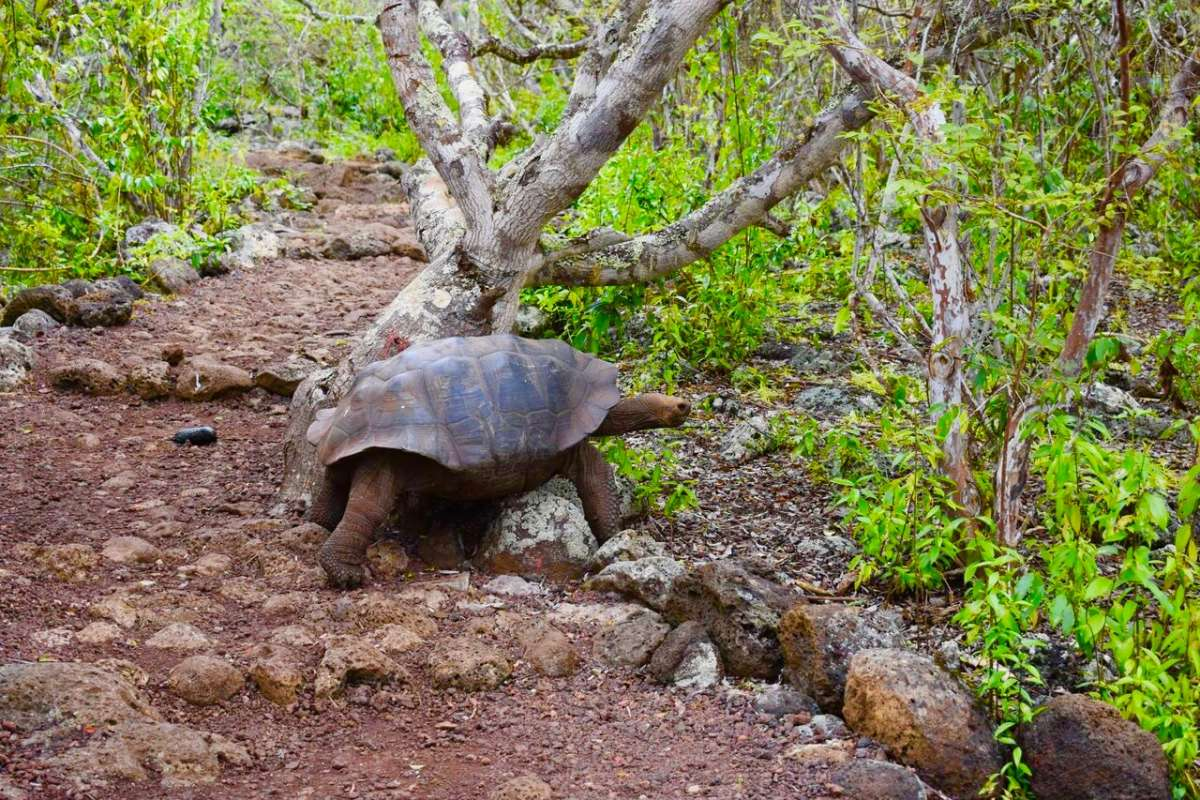 Students capture photos of tortoises in the Galápagos Islands on their summer service program.