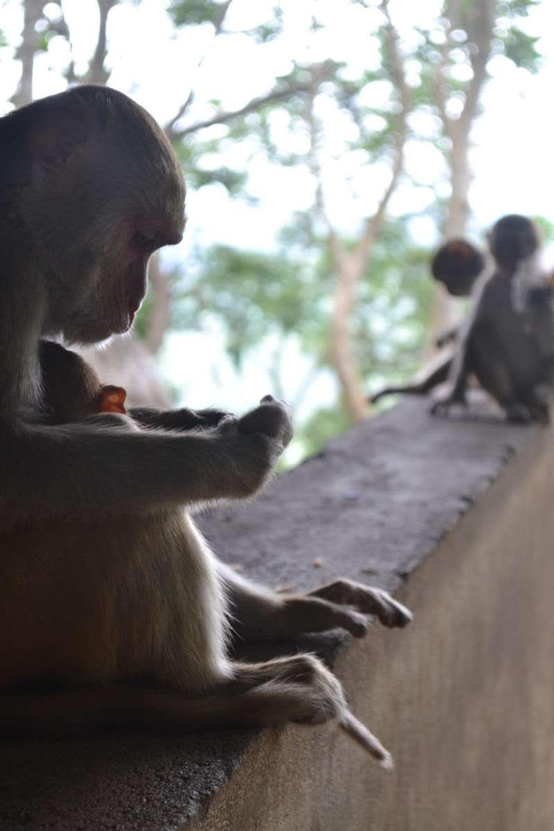 Monkeys seen by teenage travelers during summer youth program in Southeast Asia