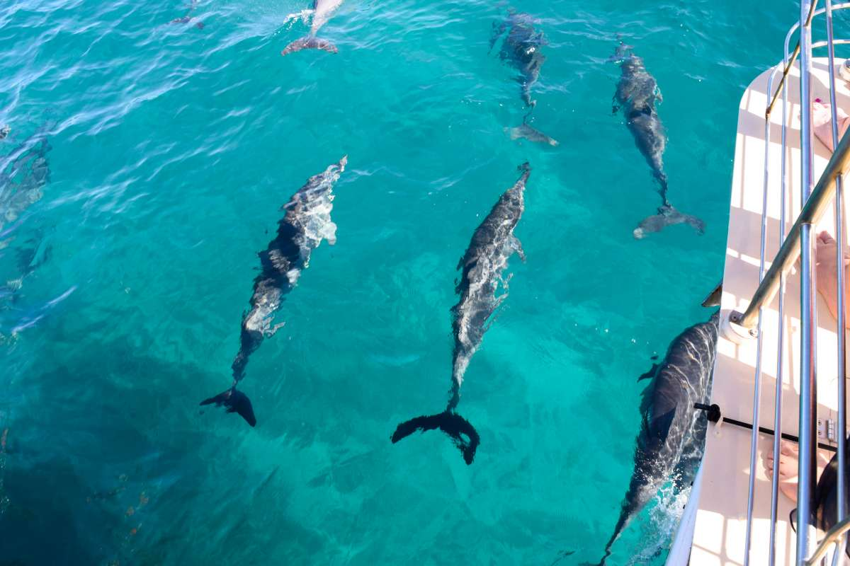 Edited-DSC_0015_Ultimate Hawaii Service Adventure Discovery