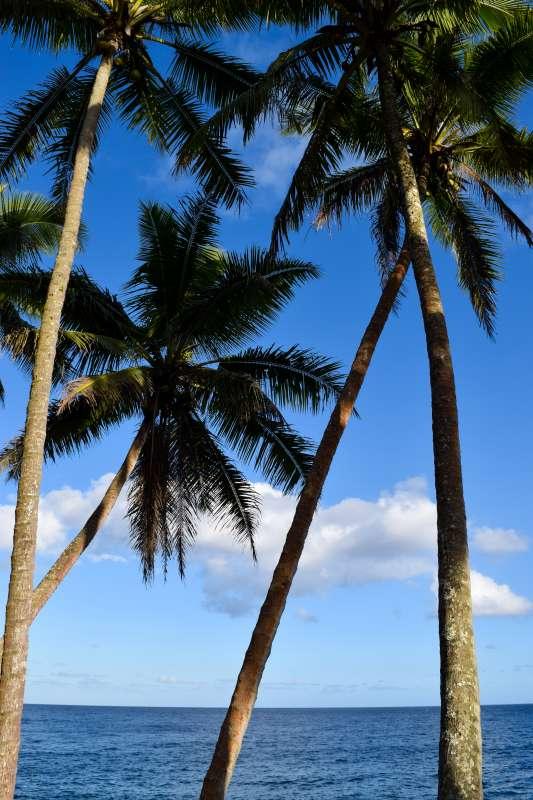 Edited-DSC_0409_Ultimate Hawaii Service Adventure Discovery