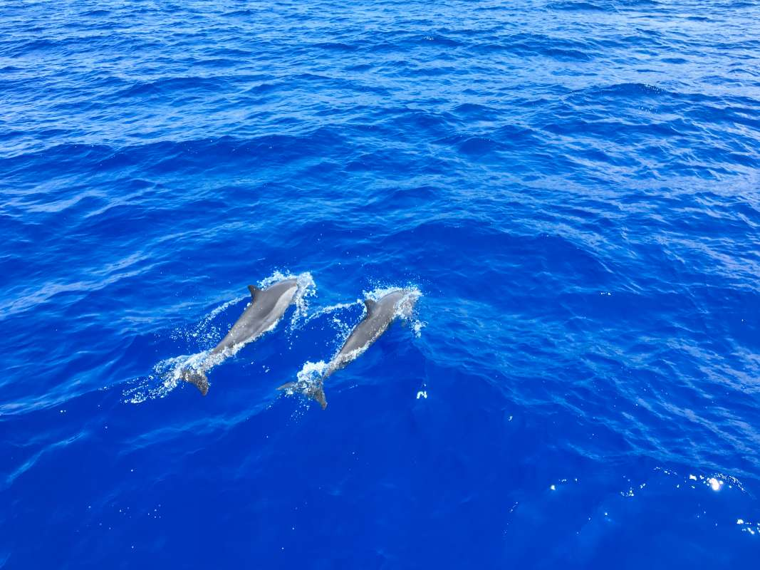 Teens watch dolphins swimming in Hawaii on service and adventure summer program.