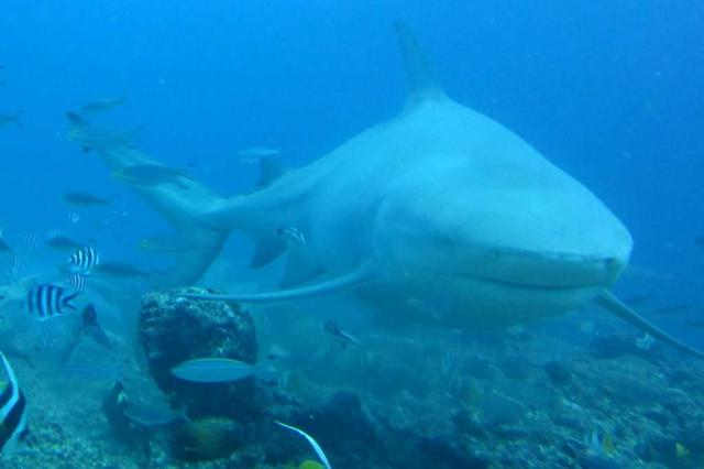 Shark seen on scuba diving excursion during summer youth program in Fiji
