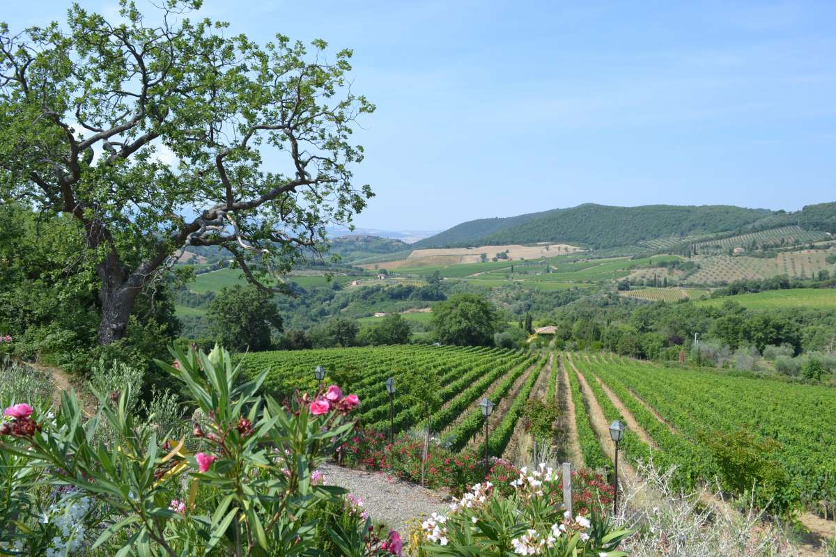 Rolling green hills Tuscany seen on teen travel tour