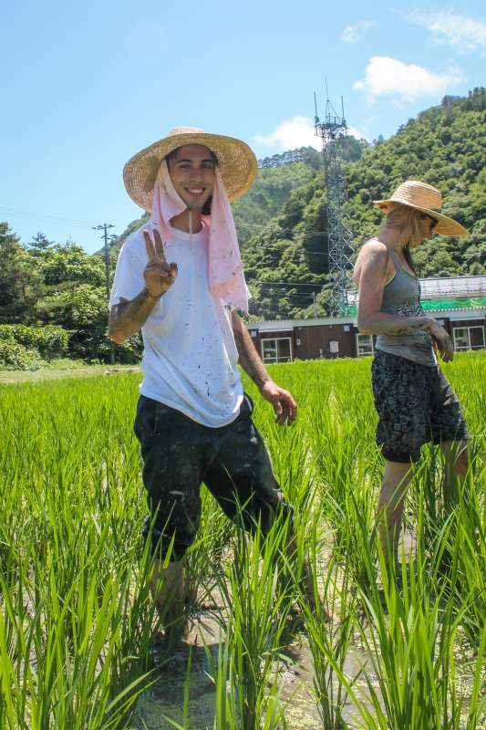 American teenagers do volunteering community service on a farm during summer youth travel program in Japan