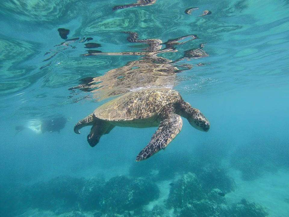 Teens spot a sea turtle on their summer service program in Hawaii.