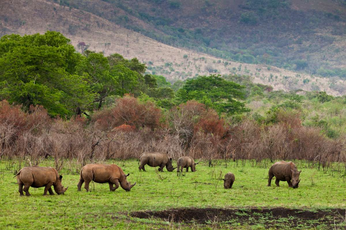 Teens see rhino on safari in Ngorongoro Crater during summer service and travel tour of Tanzania.