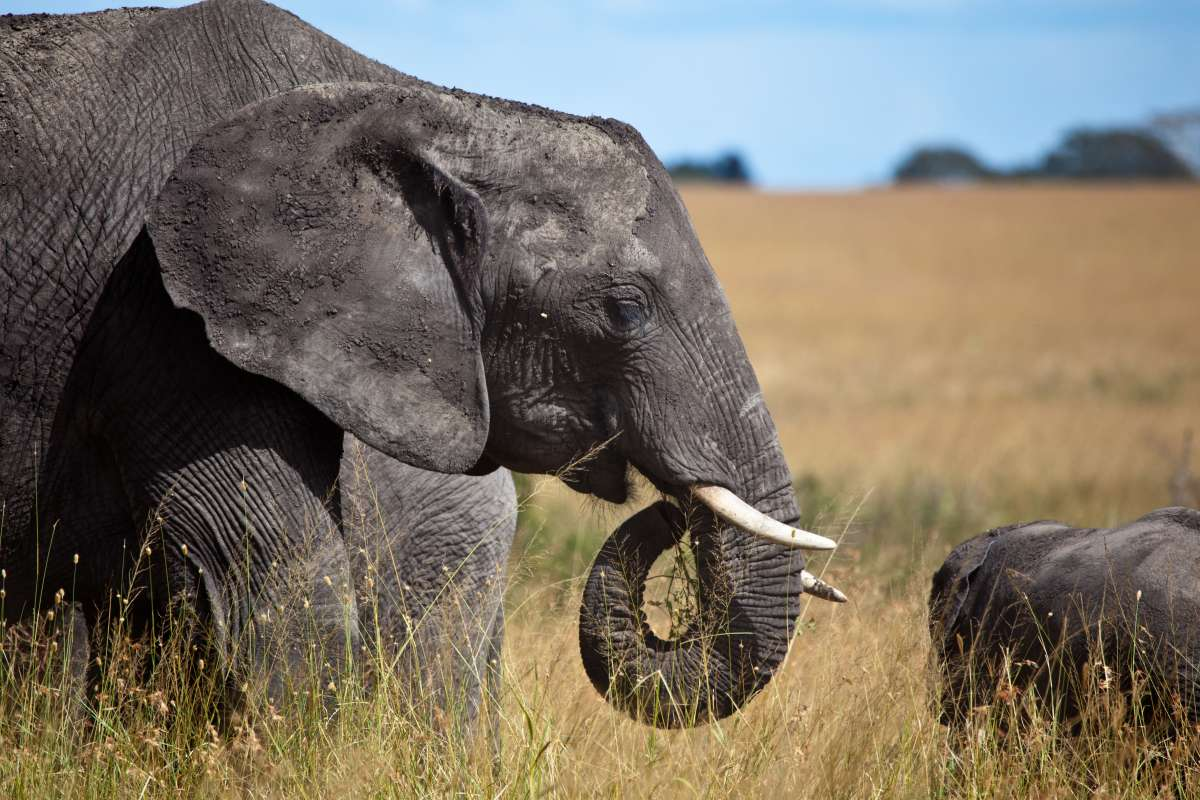Teens see elephants on safari in Tanzania during summer service and travel program.
