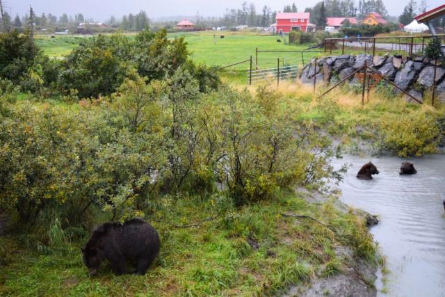 Bears seen by teens on summer Alaska teen program
