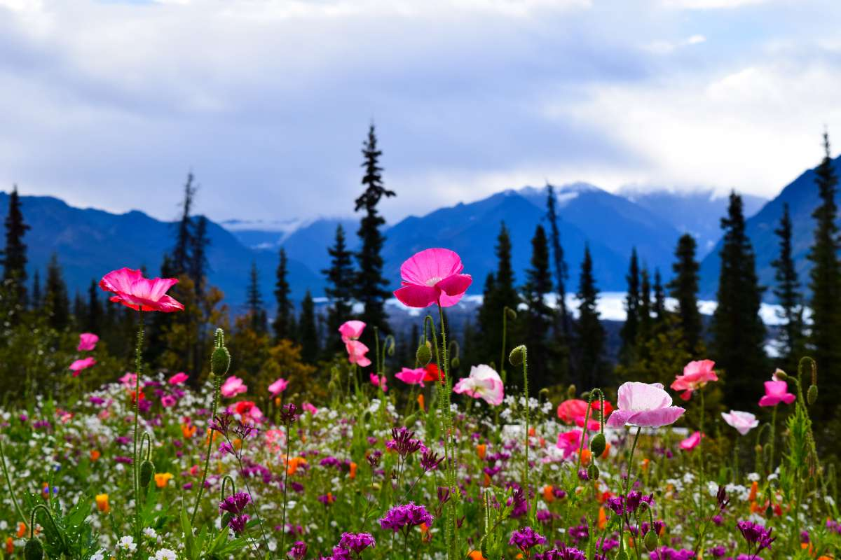 Alaska wilderness seen by teens on summer youth program