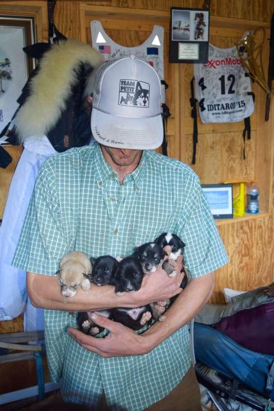 Teen traveler with Iditarod puppies on Alaska summer youth program