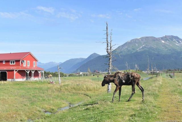 Alaska wildlife teens see on trips during summer travel programs