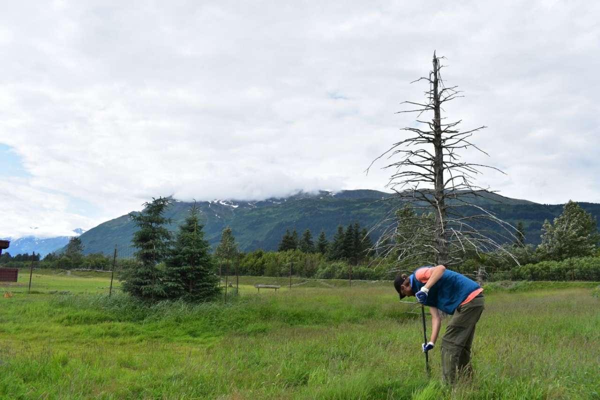 Teen traveler doing community service in Alaska on summer youth program