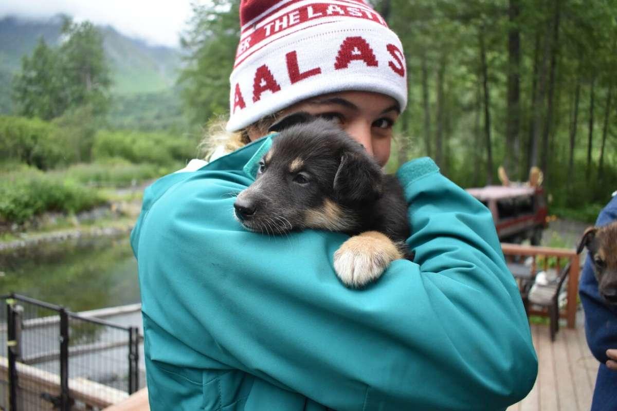 Teen traveler with Iditarod puppy in Alaska on summer program