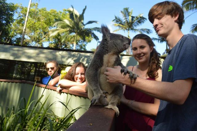 High school travelers play with a koala on their summer teen tour to Australia and New Zealand.
