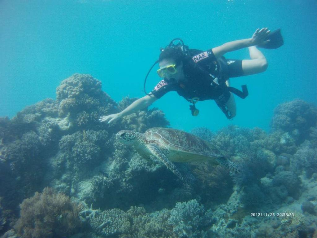 A student scuba dives with a sea turtle on their teen tour of Hawaii and Australia.