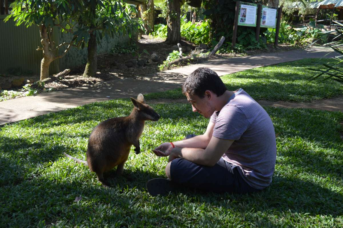 High school traveler plays with a kangaroo on teen travel Australia and New Zealand tour.