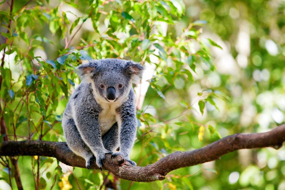 Wildlife seen on teen travel Australia and New Zealand tour