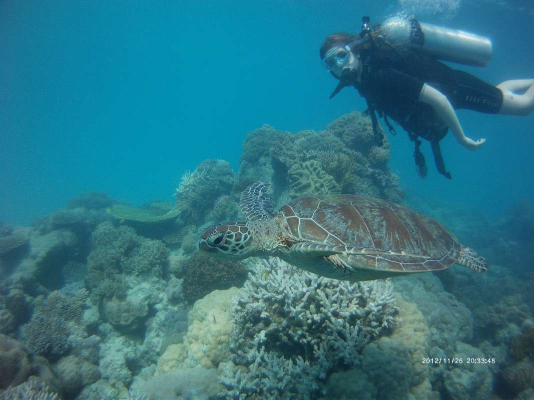 High school travelers dives at the Great Barrier Reef on a summer teen tour to Australia and New Zealand.