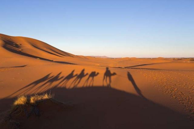Shadows of teenage travelers riding camels in Moroccan desert at sunset over dunes on summer teen adventure program
