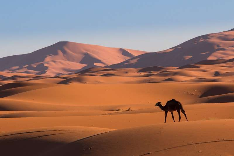 Camel in Sahara Desert Morocco seen on summer teen travel program
