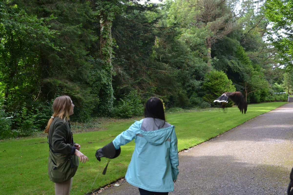 Teenage travelers participate in falconry lesson during summer youth adventure trip in Ireland