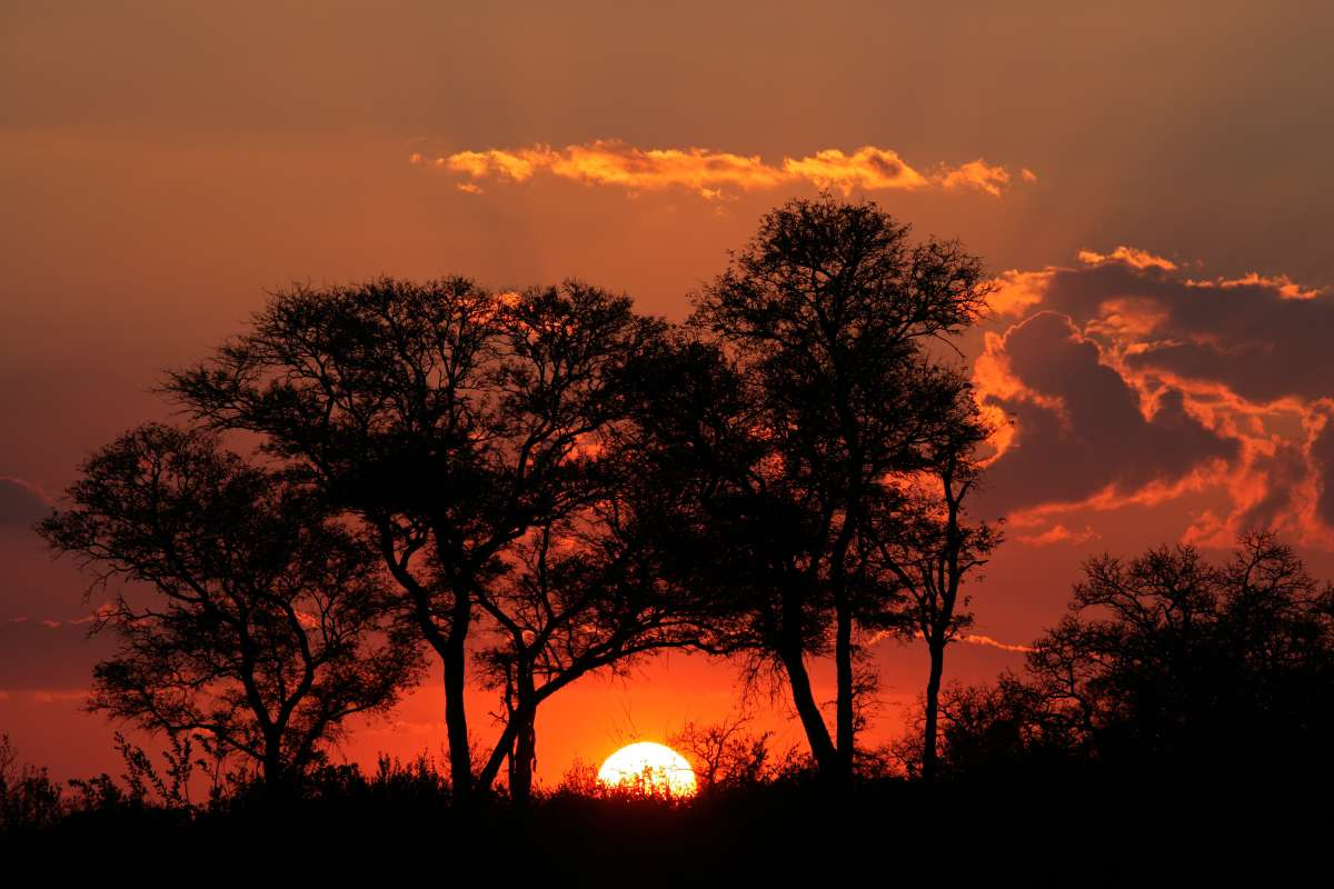 Students enjoy sunset over the savannah while on safari in South Africa during teen travel tour.