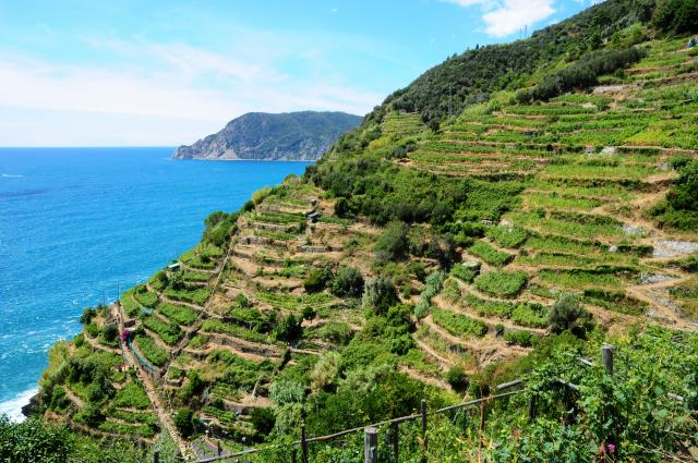Cinque Terre basil fields photographed by teenagers on summer teen travel photography program