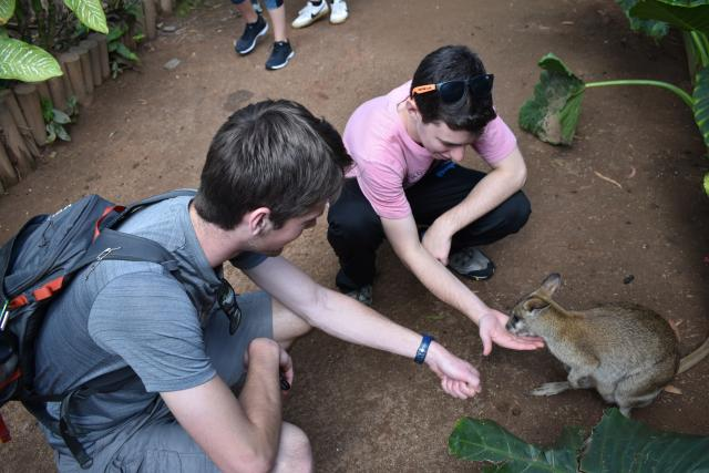 Teen travelers play with wildlife on their high school tour to Australia.