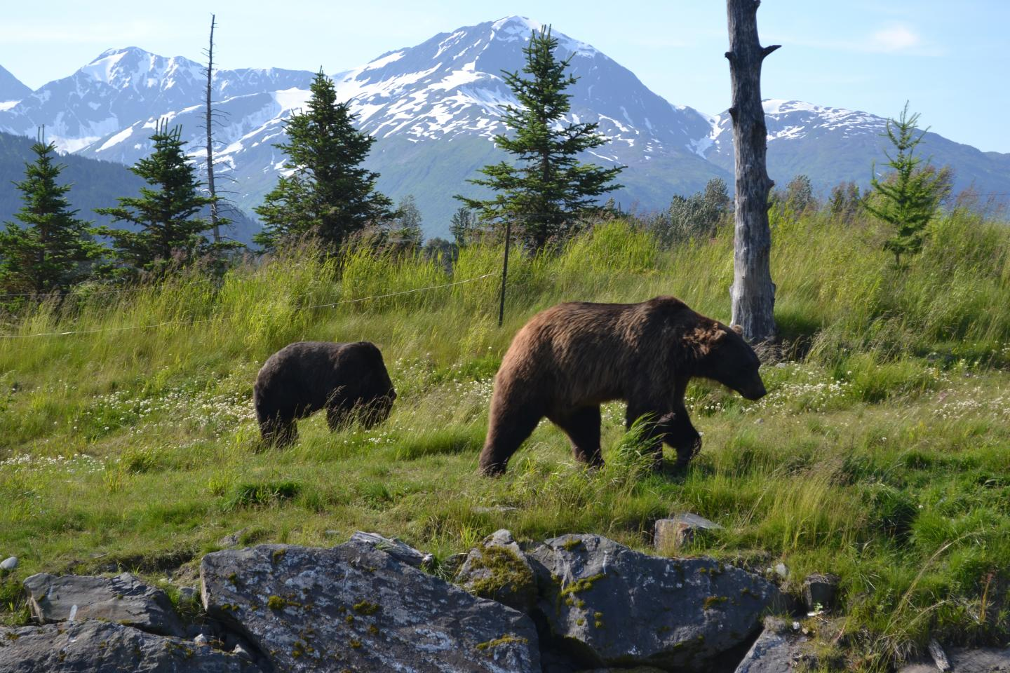 Teens spot a bear and her cub during their summer travel program in Alaska.
