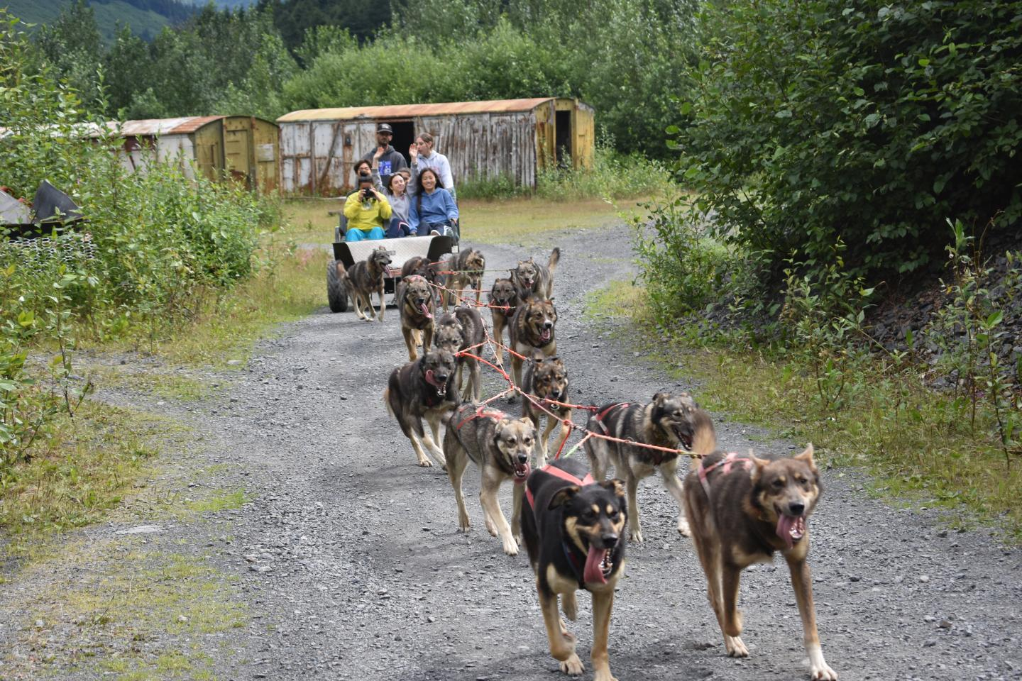 Teens go dogsledding during their summer adventure tour of Alaska.