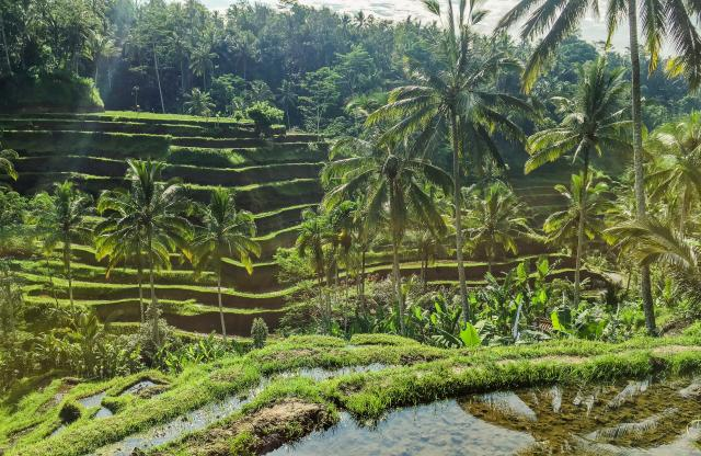 View of Rice terraces in Bali from a teen travel trip to Bali, Indonesia