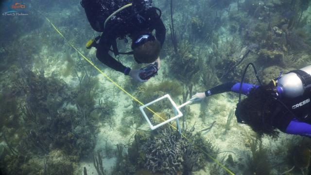21 help with coral bleach surveys