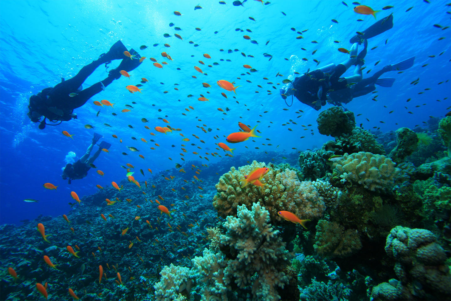 29 divers on the belize barrier reef