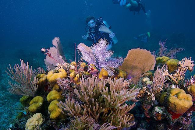 34 belize coral reefs