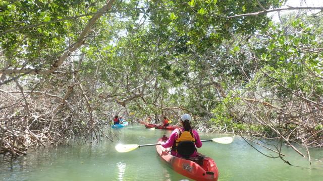Florida Keys Mangrove Kayak