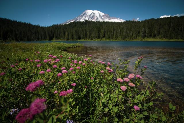 Mt Rainier 4