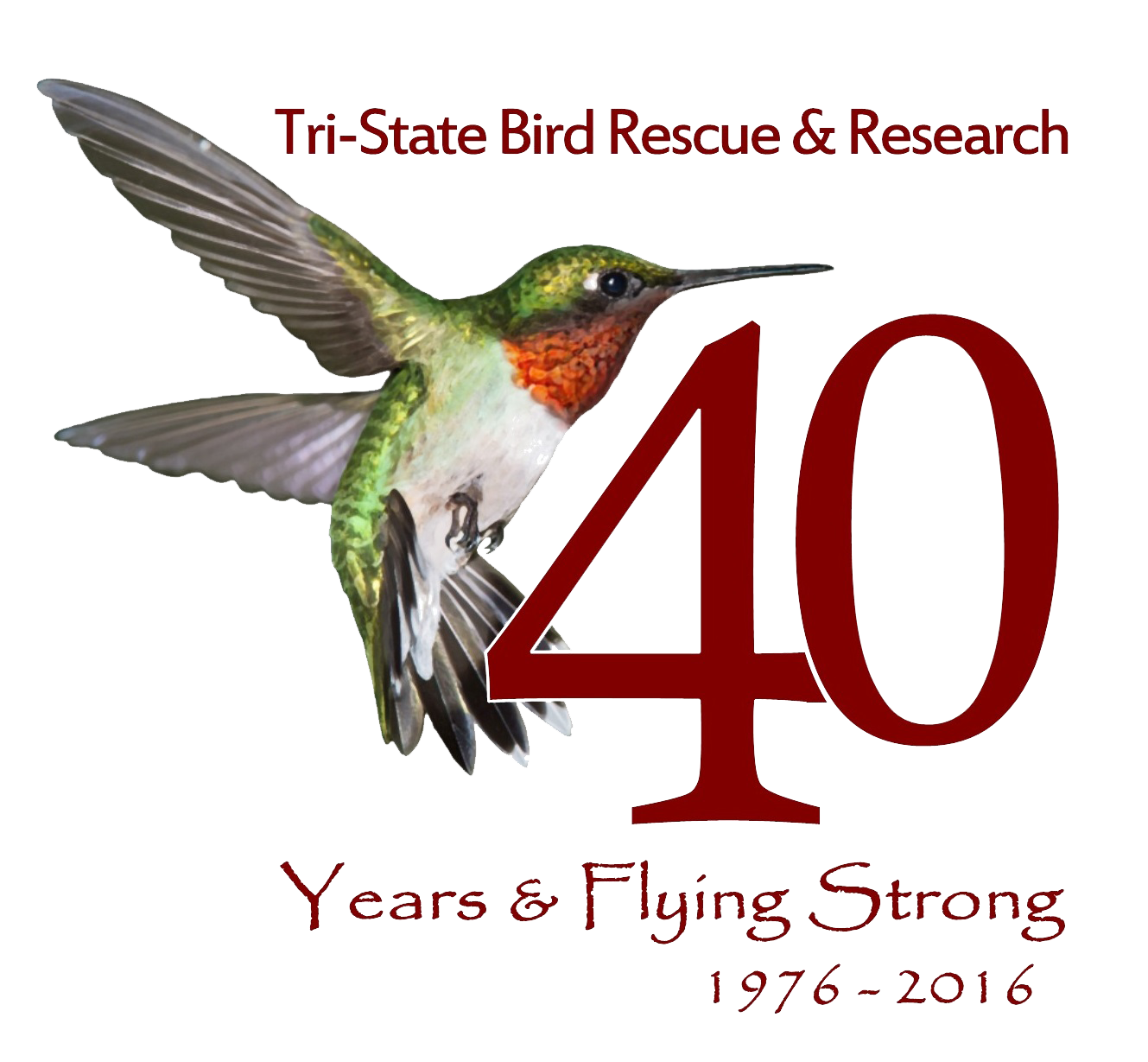 Support tri state bird rescue research memberships are valid for one year starting the month of your donation or renewal recurring donations automatically renew every 12 months sciox Gallery