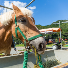 Feed a Horse for One Month (00061)