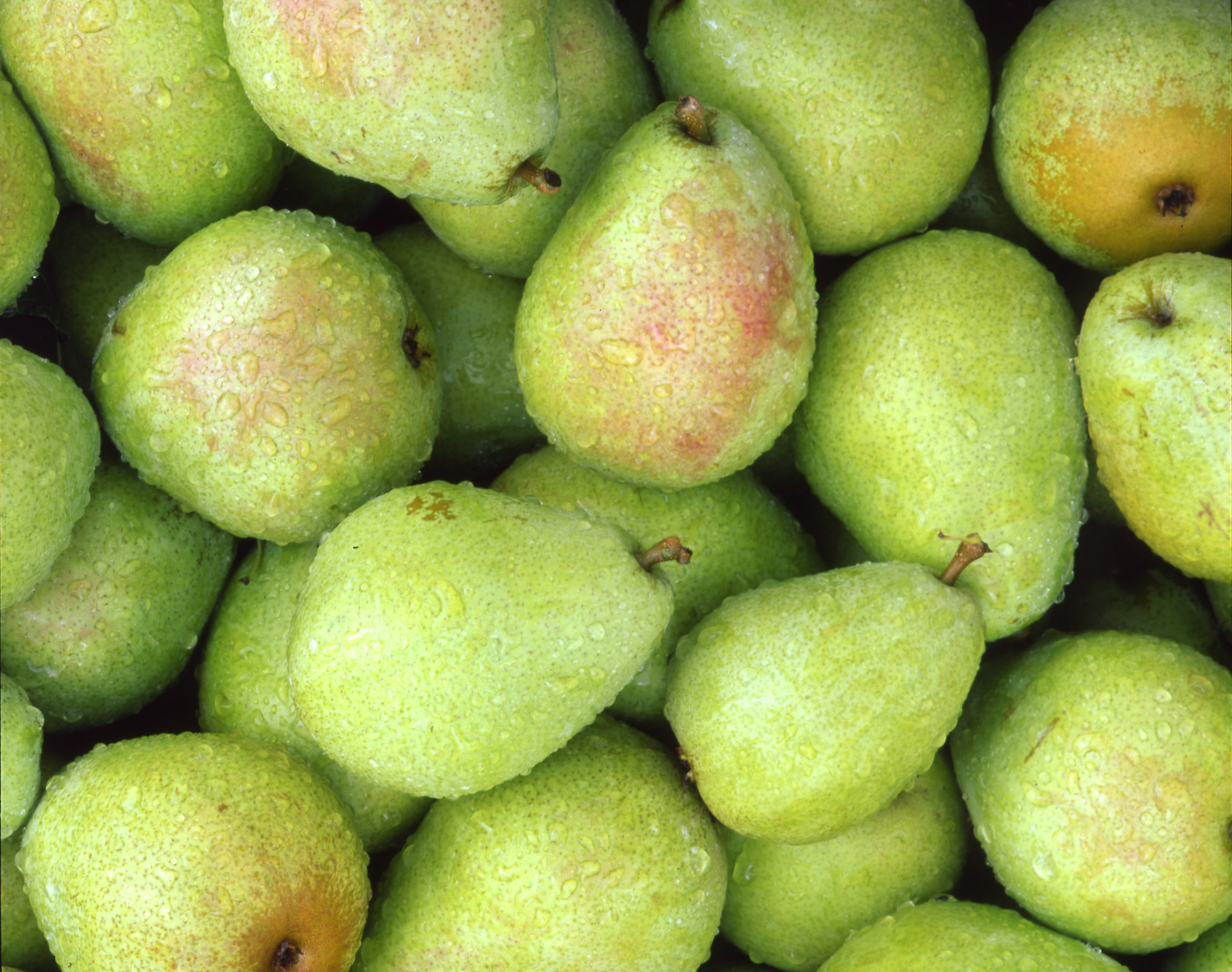 Pears (SECOND ORDER Estimated Aug 24th Pick Up)